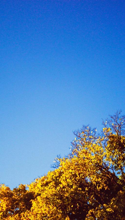 The Word Spark - blue sky